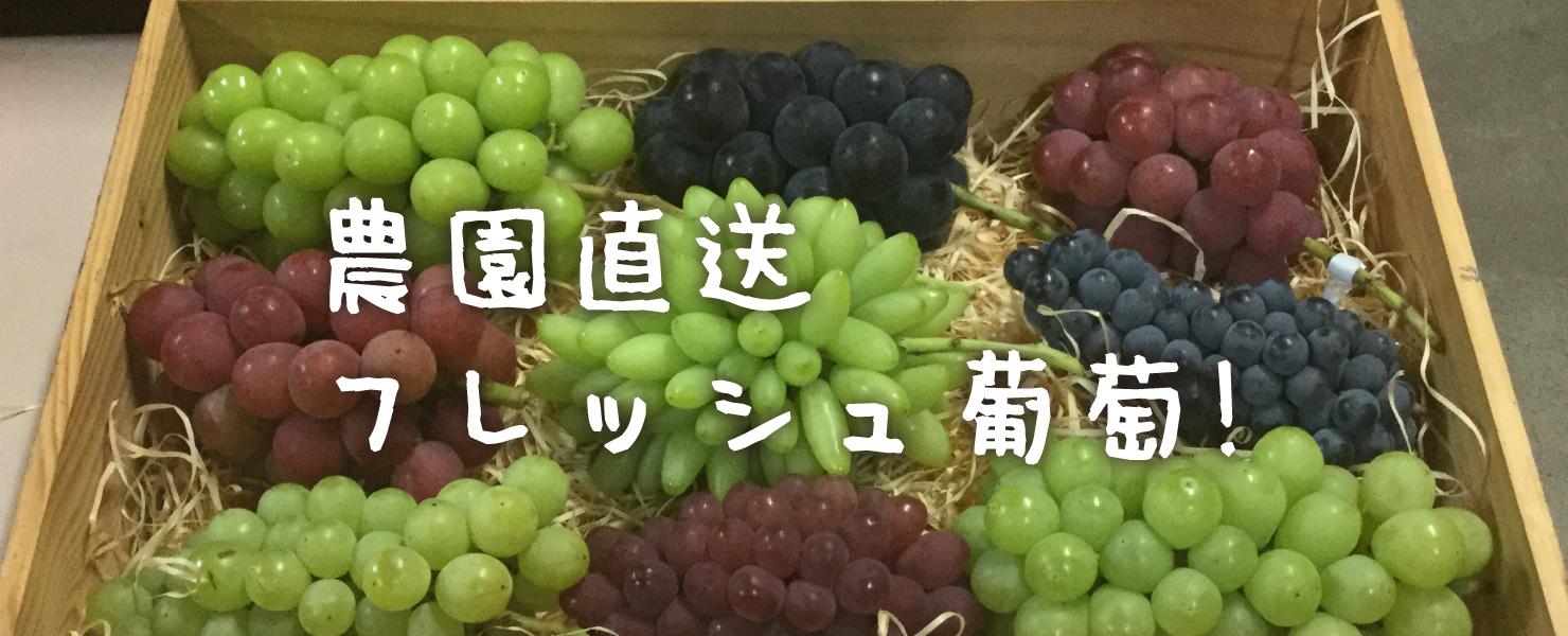 農園直送フレッシュ葡萄!